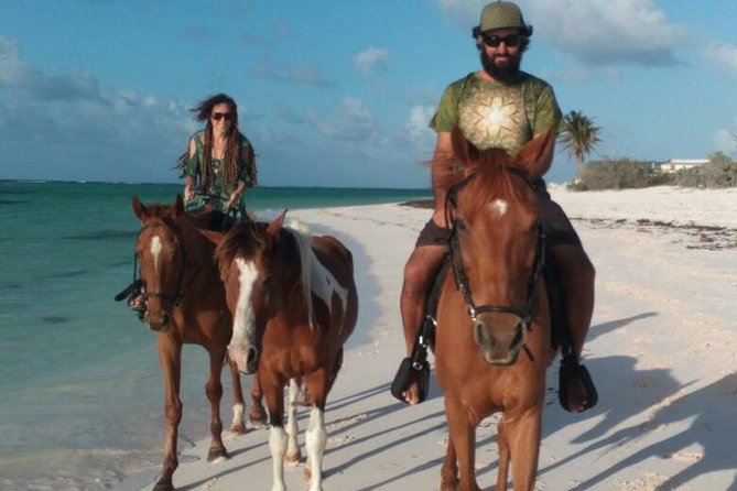 Anegada Animal Adventure (Not recommended for cruise day visitors to Tortola)