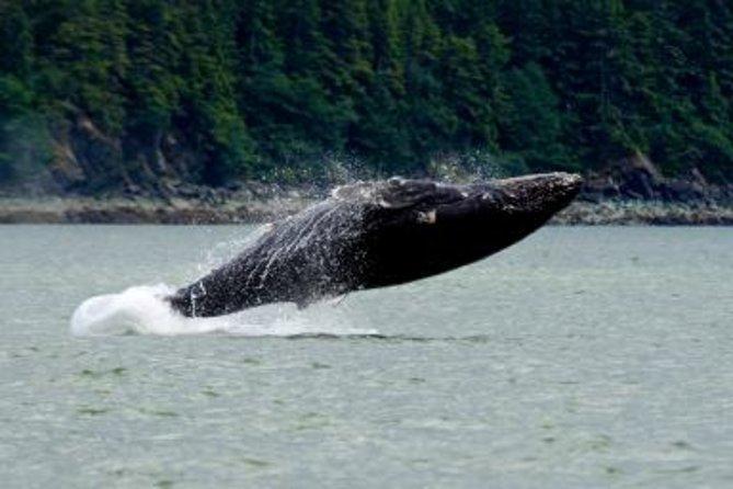 Juneau Shore Excursion: Whale-Watching Adventure with Mendenhall Glacier Tour
