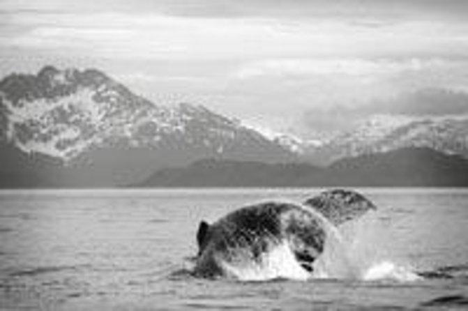 Avontuurlijk walvissen spotten en tour naar Mendenhall-gletsjer vanuit Juneau