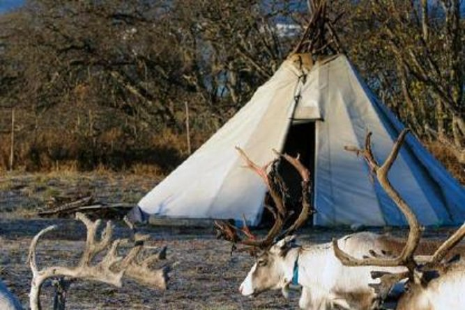 Sami Culture and Reindeer Tour con trasporto opzionale da Tromso