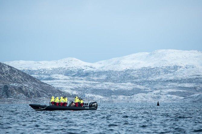 Safari baleines en canot pneumatique à Tromso