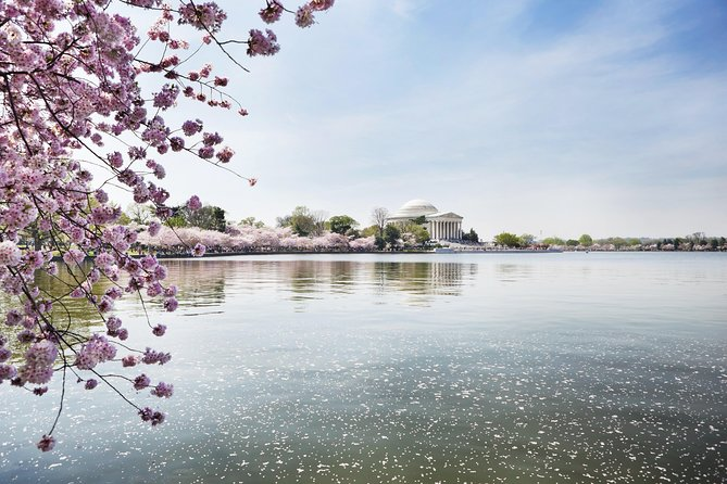 Cherry Blossom Riverboat-kryssning på Potomac