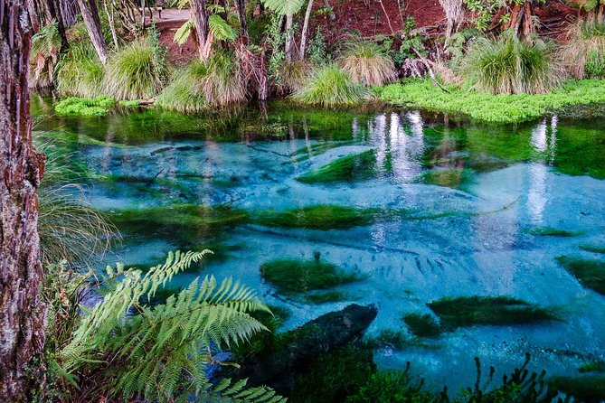 Blue Springs, Redwood Forest and Huka Falls oneday tour