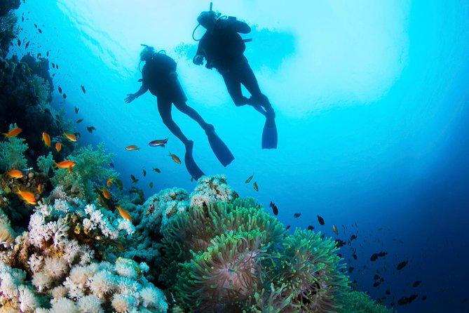 Expérience de plongée sous-marine pour débutants à Lanzarote