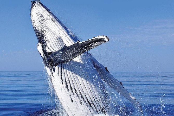 Whale Watching Combo in Cabo San Lucas: Sightseeing Cruise and Shopping
