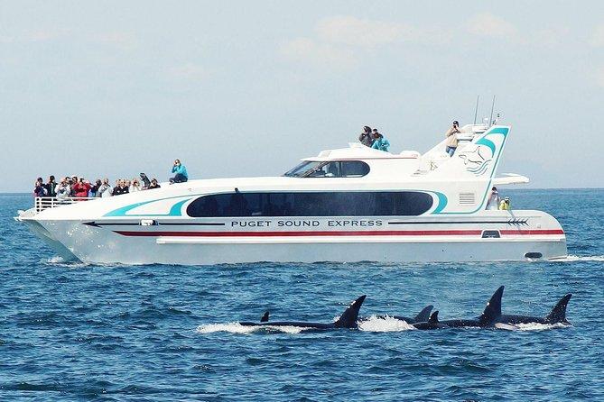 Tour di osservazione delle balene di Seattle