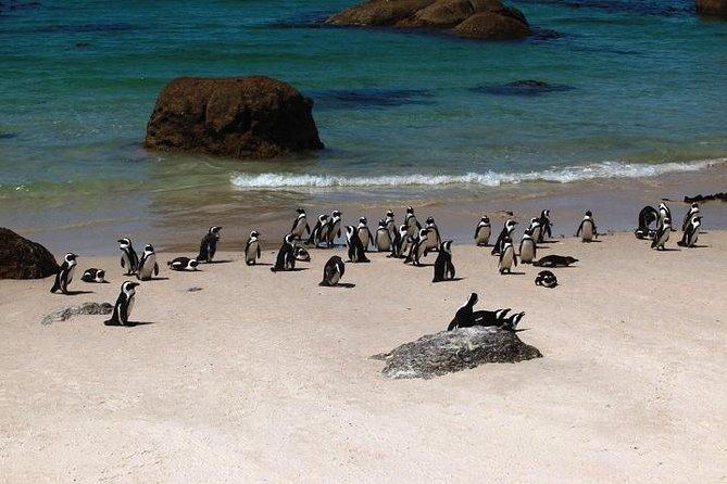 Excursão turística de meio dia à Península do Cabo saindo da Cidade do Cabo