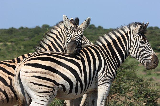 Hluhluwe - safari iMfolozi Park de Durban