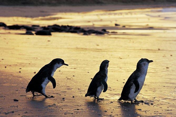 Excursión de lujo de un día a Phillip Island desde Melbourne en Hummer con Penguin Parade