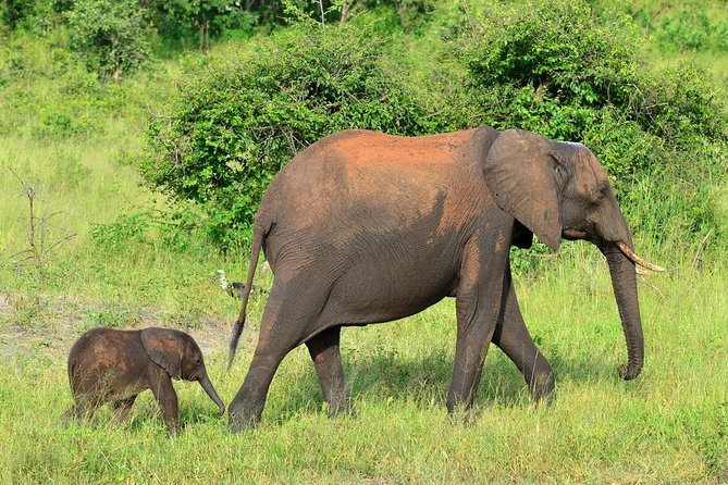Chobe National Park 4x4 Game Drive with Transport from Kasane