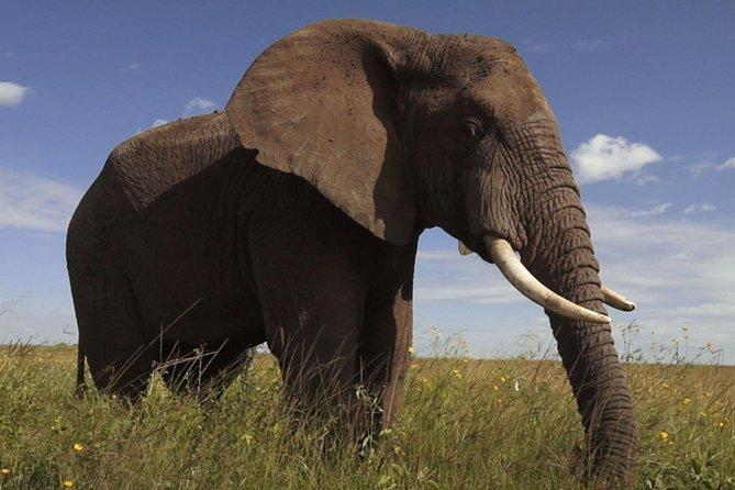 Elephant Sanctuary Tour von Johannesburg aus