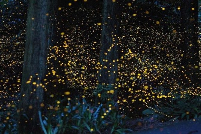 Private Tour: Kuala Selangor Fireflies River Ride Including Dinner from Kuala Lumpur