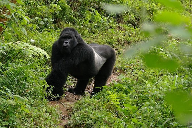 Gorilla Tracking Day Tour from Kabale