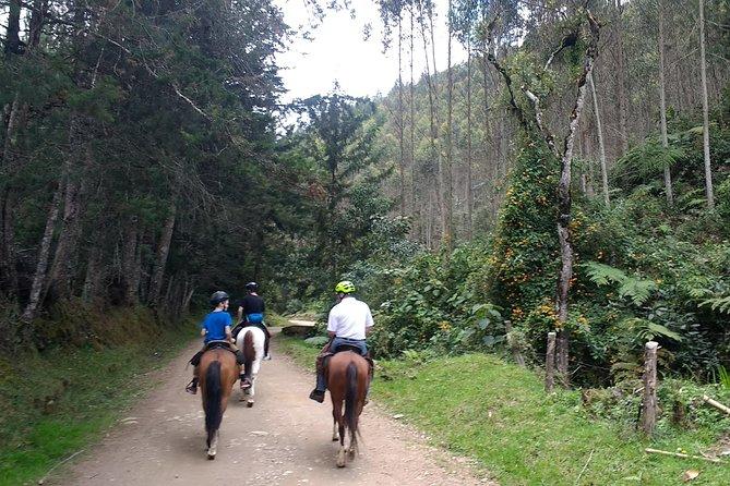 Experience A Horseback Ride Through Medellin´s Countryside