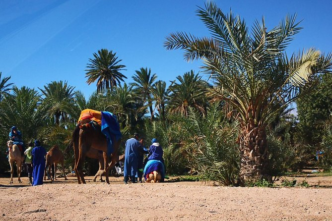 Camel ride in the palm grove of Marrakech