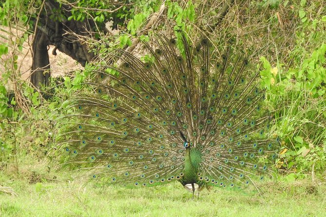 Birding Tour in Baluran National Park