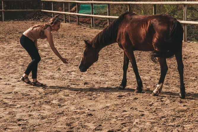 Horse Whispering with Catalan Horses