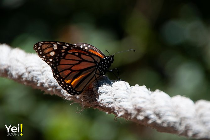 Monarch Butterfly Tour (Departing from Morelia) photo 21