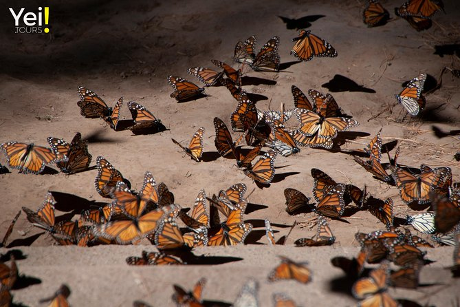 Monarch Butterfly Tour (Departing from Morelia) photo 12
