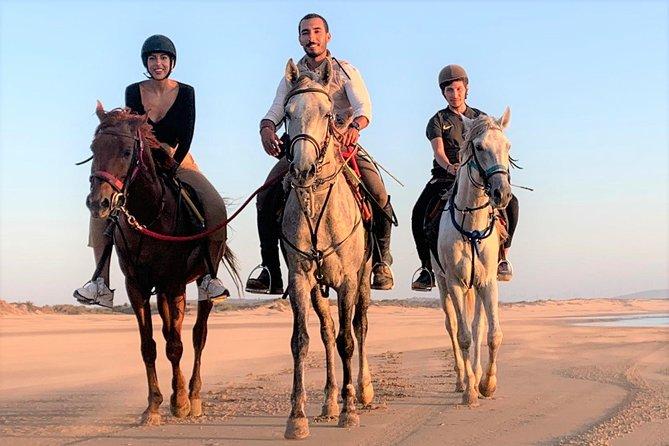 Horse riding on the beach of Essaouira 1 hour