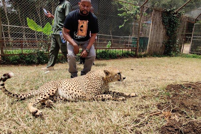 Nairobi Tours/Nairobi national park/Elephant & Giraffe Centre/Steadmak Orphanage