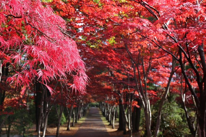 [Sapporo] Wear Japanese clothes and leave for autumn leaves in a private car