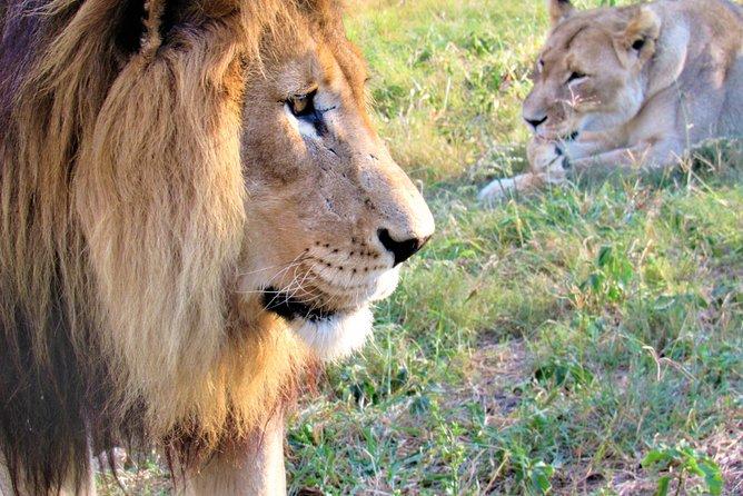 Safari au parc national Kruger d'une journée