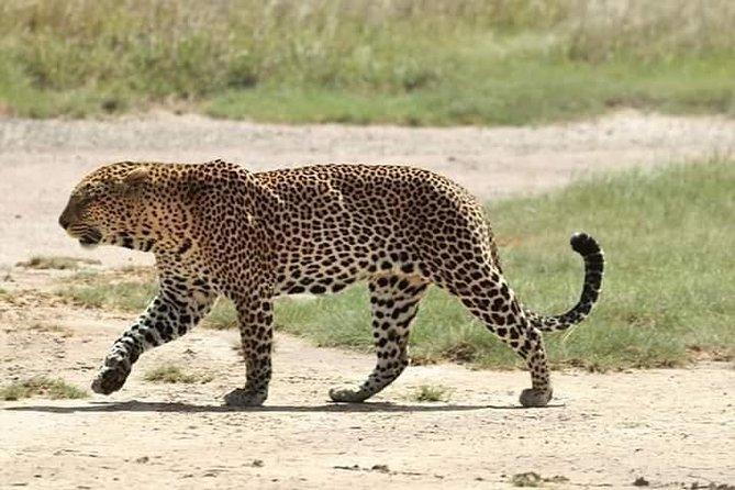 Half Day Nairobi National Park , Nairobi Safari Walk