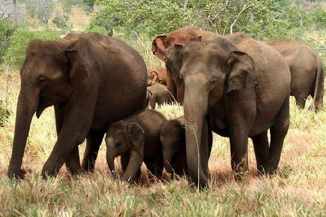 Full Day Shared Safari at Yala National Park by La Safari Inn Tours