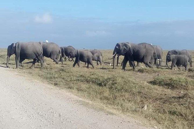3 Days Camping Safari in Amboseli National Park, Kenya