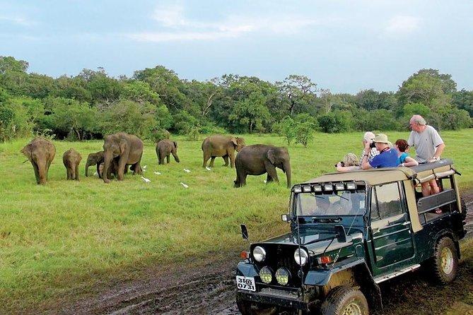 Afternoon Game Drive at Minneriya National Park from Polonnaruwa