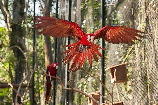 Itaipu Dam & Bird Park & Iguassu Falls Brazilian Side From Puerto Iguazu Hotels