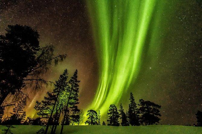 Northern Light Aurora Tour från Kemi