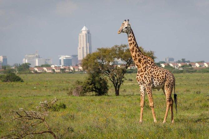 Nairobi National park and elephant orphanage.