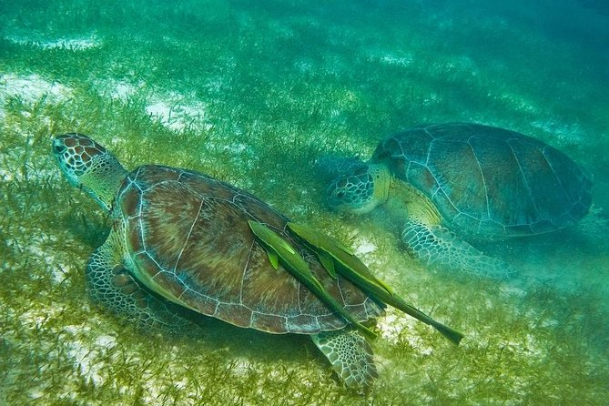 Turtles and Cenote from Cancun