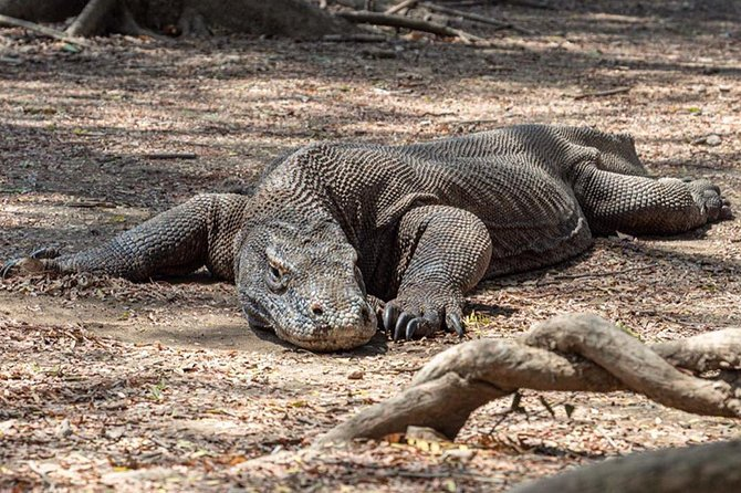 Best Of Tour Komodo Island - Labuhan Bajo