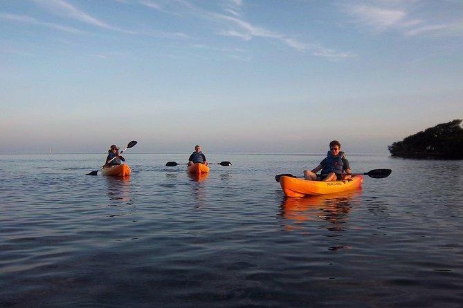 Kayak or Paddleboard Eco Tour through the Mangrove Ecosystem