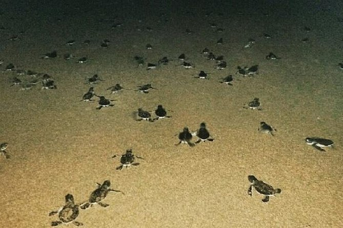 Surabaya to Meru Betiri Sukamade Sea-turtle Conservation