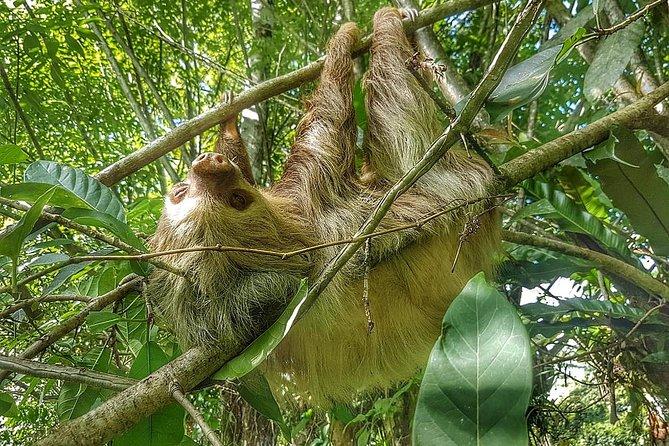 Sloth Watching Tour