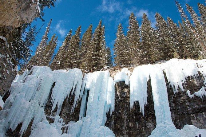 Winter Banff/ Yamnuska Wolfdog Sanctuary 1 Day Tour