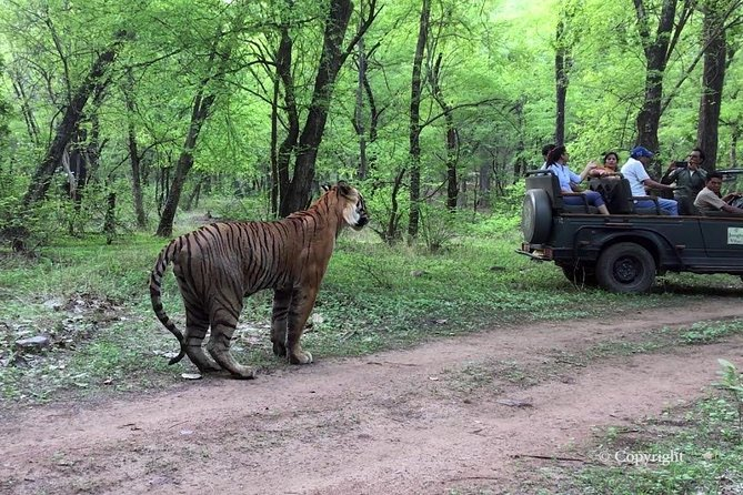 8 Days Golden Triangle Tour with Ranthambore and Udaipur from Delhi
