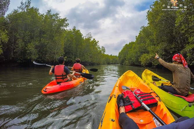 Mangrove Kayaking Tour In Langkawi