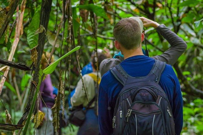 Excursión de full day, observando la vida silvestre en la selva del Yarapa