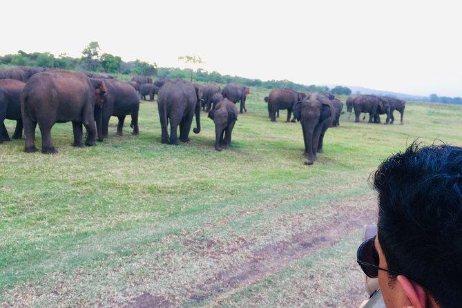 Minneriya & Kaudulla National Park Privet Jeep Safari