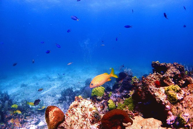 SPECIAL! Snorkel at MUSA - The Underwater Museum Reservation