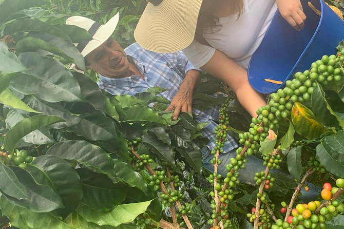 Coffee tour photo 38