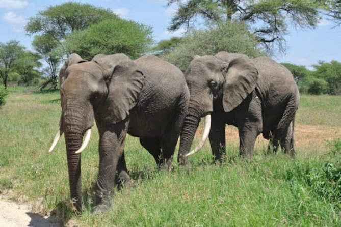 Arusha National Park 4 Days
