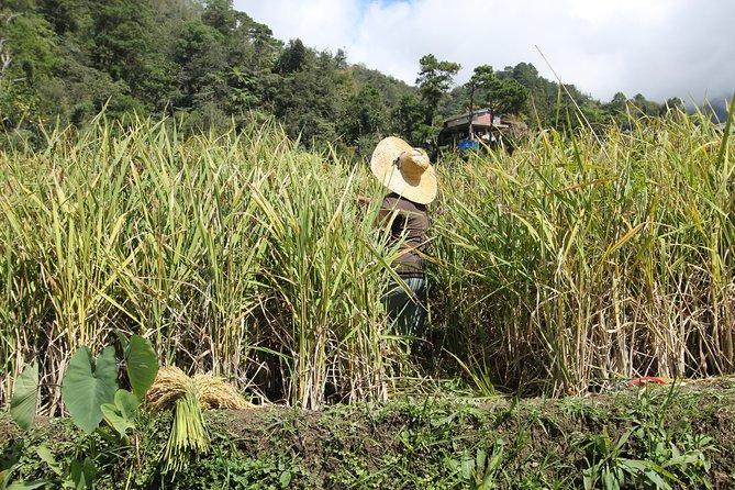 Banaue - Batad - Sagada rice terraces
