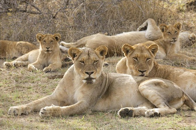 Big 5 Safari Experience at Pilanesberg National Park