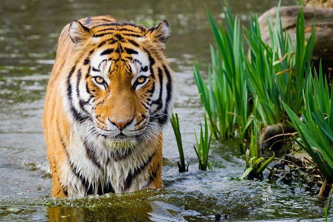4 Day Golden Triangle with Ranthambore Tiger Safari Tour from Delhi